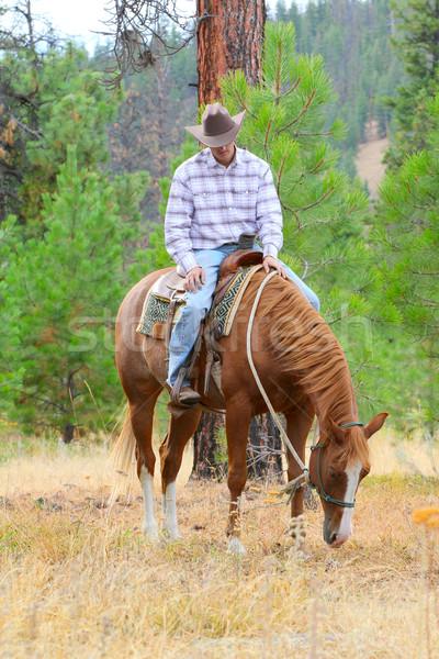 Jovem vaqueiro equitação cavalo campo branco Foto stock © vanessavr