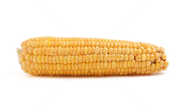 Corn in cob Stock photo © vankad