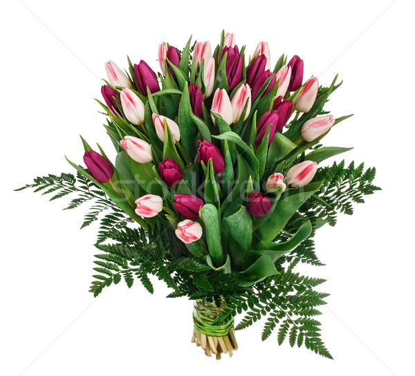 букет тюльпаны Tulip цветы белый природы Сток-фото © vankad