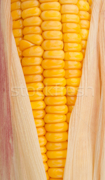 Corn in cob Stock photo © vankad