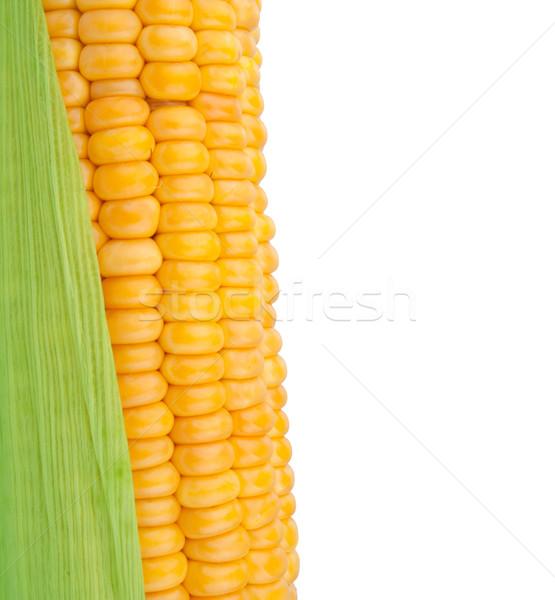 Kukorica izolált fehér eszik mezőgazdaság friss Stock fotó © vankad