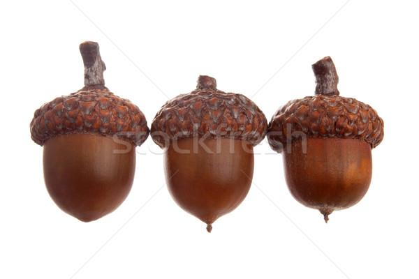 üç farklı ahşap düşmek tohum somun Stok fotoğraf © vankad