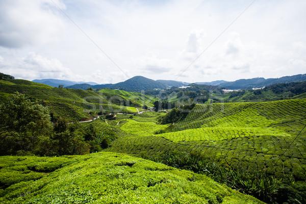 Tea felvidék zöld dombok tájkép égbolt Stock fotó © Vanzyst