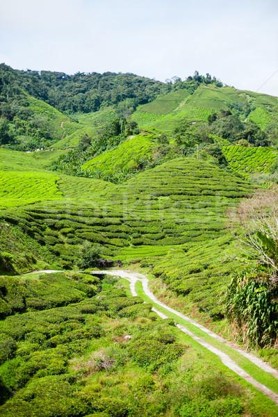 Tea felvidék zöld dombok tájkép fa Stock fotó © Vanzyst