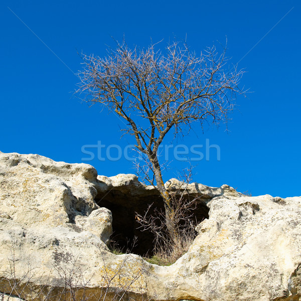 A tree in the sandstone rocks. Stock photo © vapi