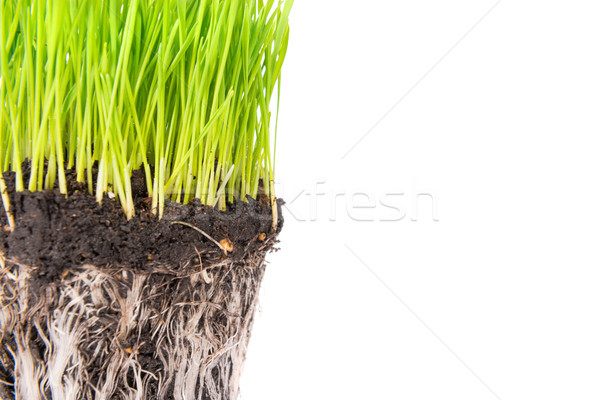 Green grass and soil from a pot Stock photo © vapi