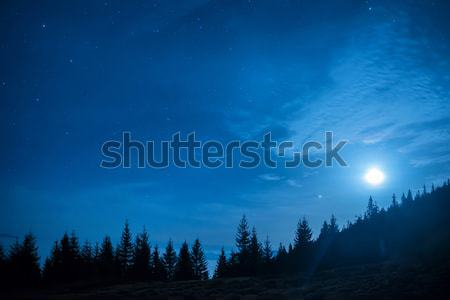 Stock photo: Forest of pine trees under moon and blue dark night sky