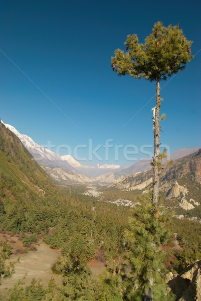 Tibetan green valley Stock photo © vapi
