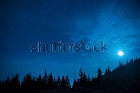 Stock fotó: Erdő · fenyőfa · fák · hold · kék · sötét