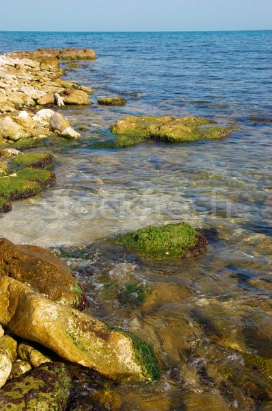 Coast with stones with green marine algae. Stock photo © vapi