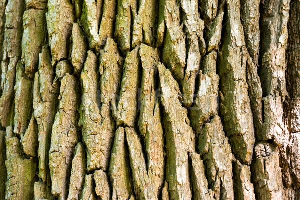 текстуры старые дуба природы фон кожи Сток-фото © vapi