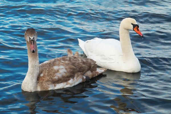Beyaz aile sevmek doğa mavi tüy Stok fotoğraf © vapi