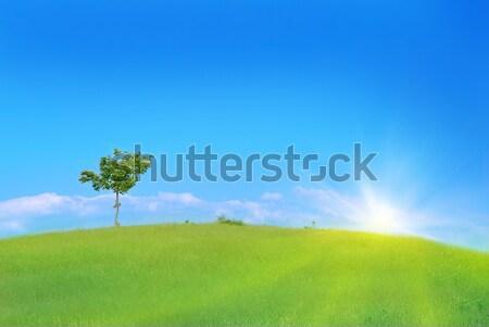 Fa zöld mező magányos zöld fű kék ég Stock fotó © vapi