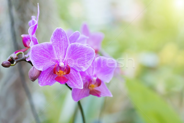 Viola orchidee tropicali foresta selvatico bella Foto d'archivio © vapi