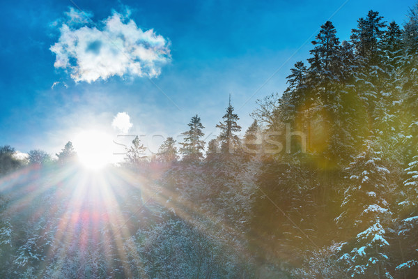 Sun rising from the mountain with forest Stock photo © vapi