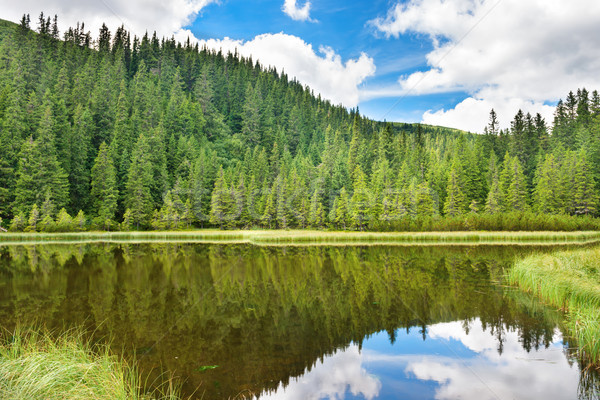 Blue water in a forest lake Stock photo © vapi