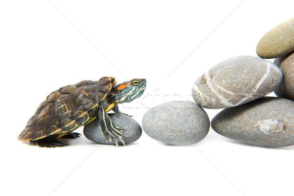 Turtle climbing up the steps Stock photo © vapi