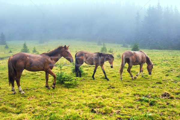 Herd of running brown horses Stock photo © vapi