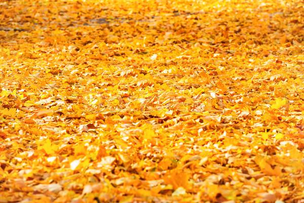Autumn fallen orange leaves in a park Stock photo © vapi