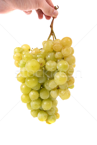 Hand holding bunch of grapes Stock photo © vapi