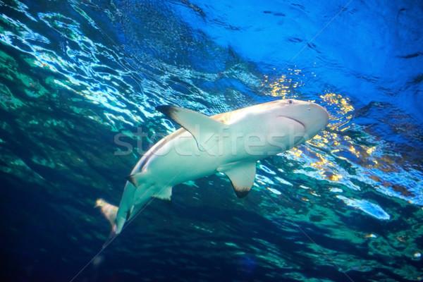 Сток-фото: Карибы · акула · синий · океана · воды · морем