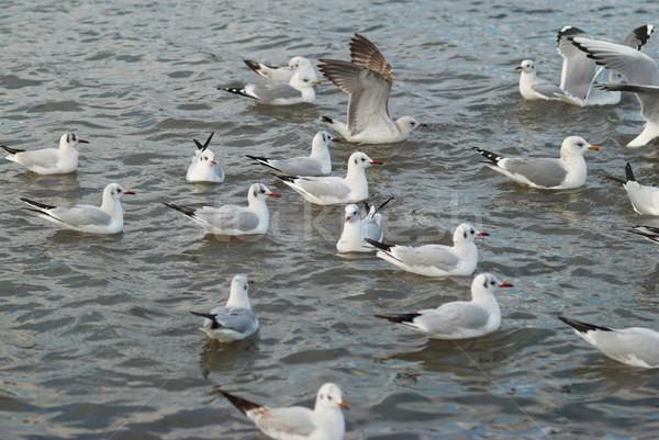 群れ カモメ 飛行 海 水 ストックフォト © vapi