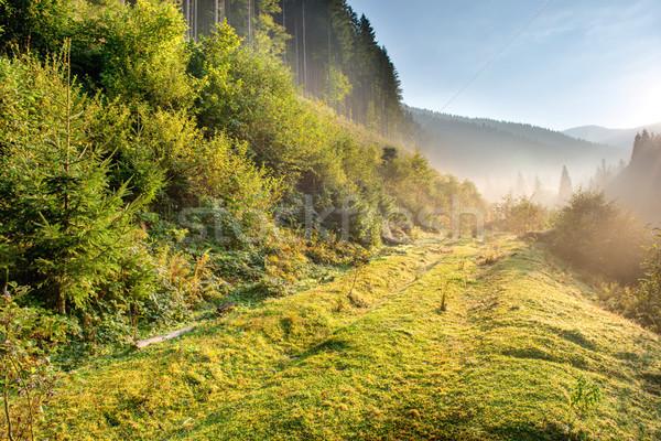 Reggel zöld erdő nap fa fű Stock fotó © vapi