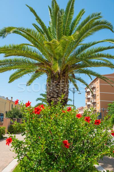 Vermelho flor tropical hibisco palmeira árvore rosa Foto stock © vapi