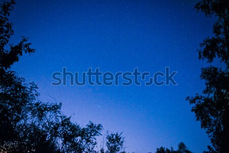 Forest under blue dark night sky Stock photo © vapi