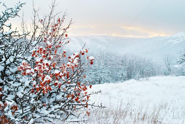 Stock fotó: Tél · tájkép · naplemente · bokor · száraz · piros