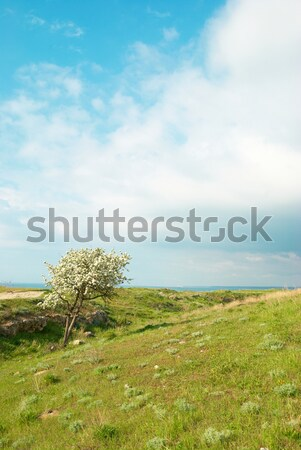 Yeşil manzara bulutlar yeşil ot mavi gökyüzü gökyüzü Stok fotoğraf © vapi