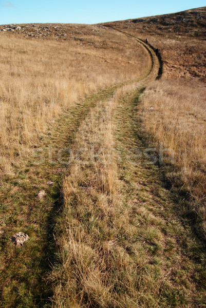 Country road through the grass field. Stock photo © vapi