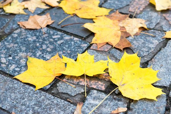 Colorful autumn leaves on the stone Stock photo © vapi