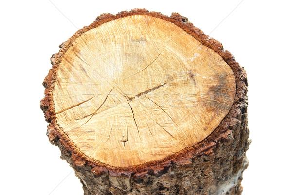 Wooden stump Stock photo © vapi