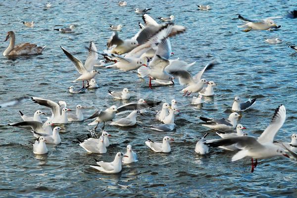 Sereg sirályok repülés fölött tenger víz Stock fotó © vapi