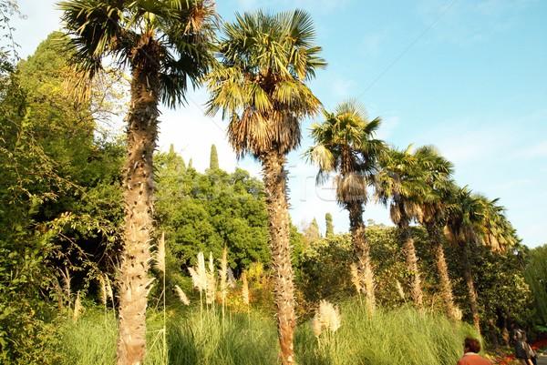 Palmiye ağaçları hat plaj gökyüzü bulutlar güzellik Stok fotoğraf © vapi