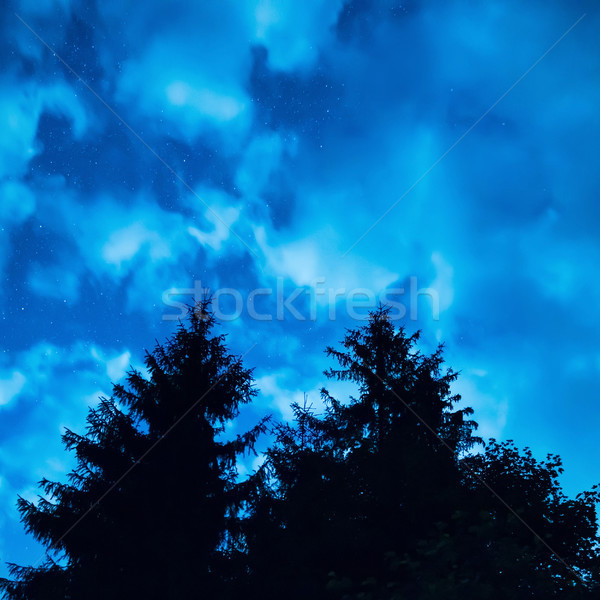 Two pine trees under blue night sky Stock photo © vapi