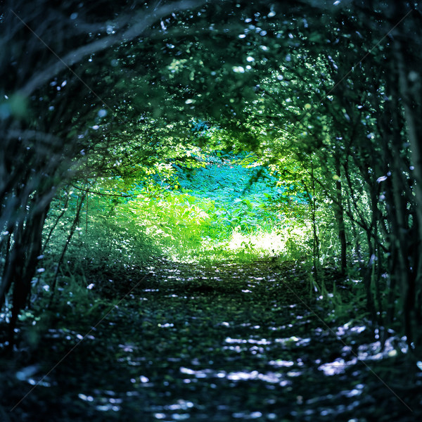 Magical forest with path to the light Stock photo © vapi
