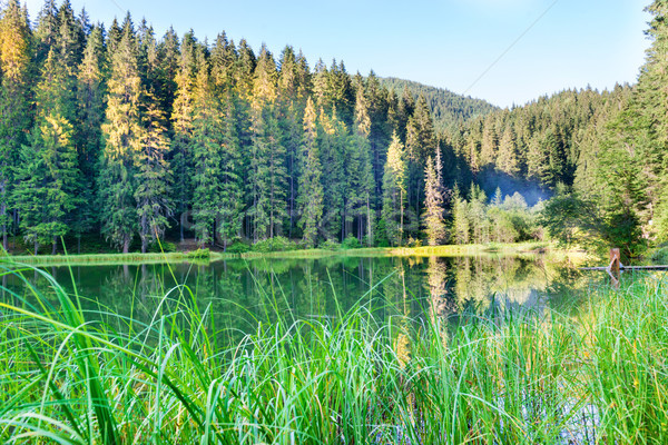 Forest lake in the mountains Stock photo © vapi