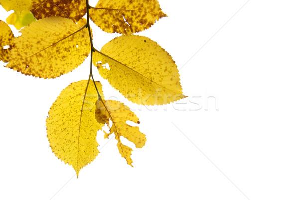 Isolé blanche texture design feuille Photo stock © vapi