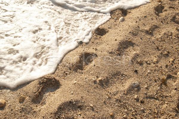 Footprints on the sand Stock photo © vapi