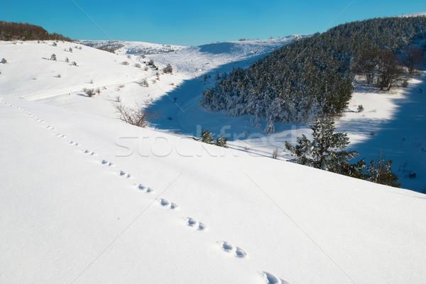 Tél mély hó lábnyomok égbolt fa Stock fotó © vapi
