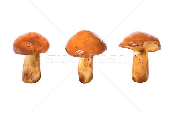 Três comestível cogumelos isolado branco fundo Foto stock © vapi