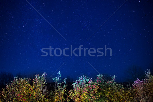 Autumn forest under blue dark night sky Stock photo © vapi