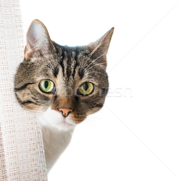 Little gray striped cat Stock photo © vapi