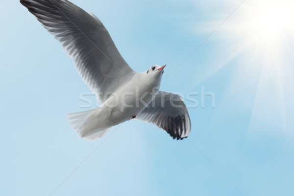 Stock photo: Sun and seagull