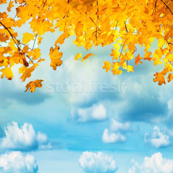 Stok fotoğraf: Altın · sarı · turuncu · yaprakları · mavi · gökyüzü · beyaz