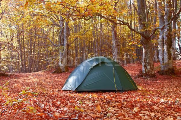 зеленый палатки лес желтый осень дома Сток-фото © vapi