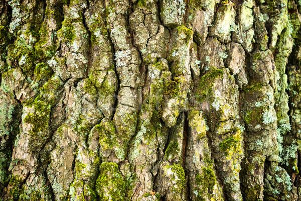 オーク 樹皮 テクスチャ マクロ ショット 樫の木 ストックフォト © vapi