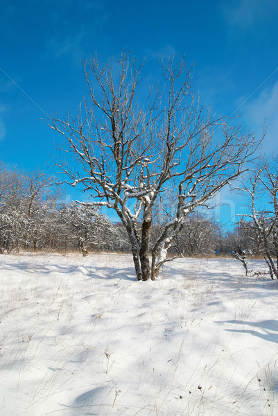 Winter icy forest Stock photo © vapi